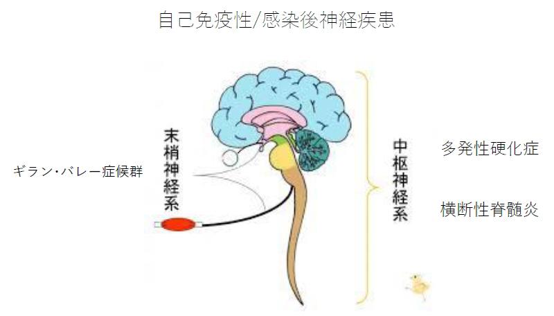 自己免疫性/感染後神経疾患