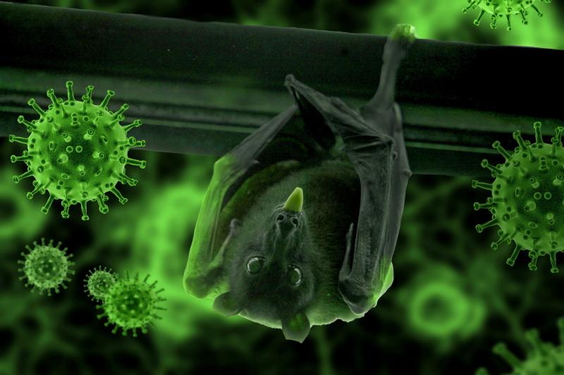 新型コロナウイルスはSARSと同様に、野生のコウモリから伝播したと考えられています。