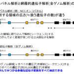 遺伝子パネル解析と網羅的遺伝子解析の違い