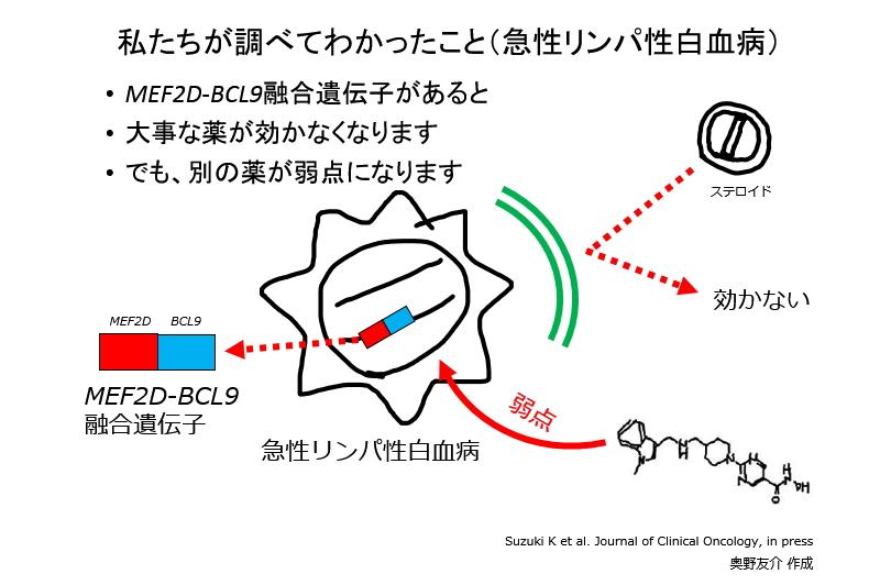 MEF2D-BCL9融合遺伝子があると 大事な薬が効かなくなります