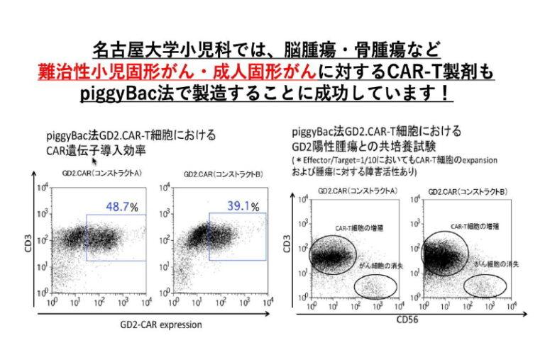名古屋大学における非ウイルスベクター法によるCAR-T療法の現状